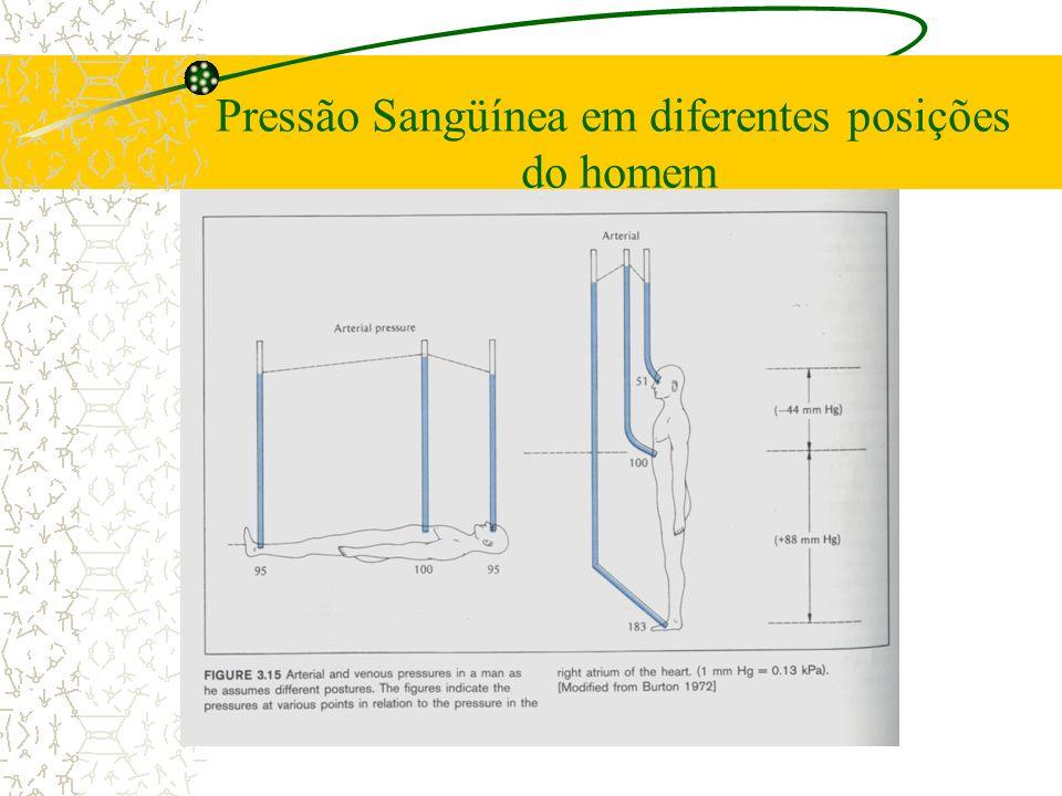 Pressão Sangüínea em diferentes posições do homem