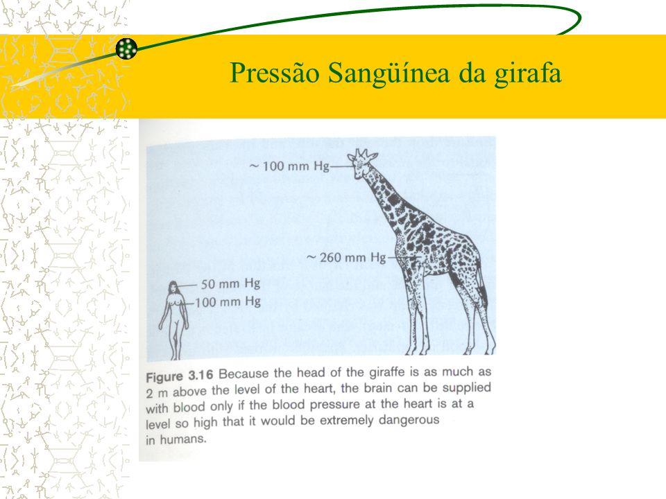 Pressão Sangüínea da girafa