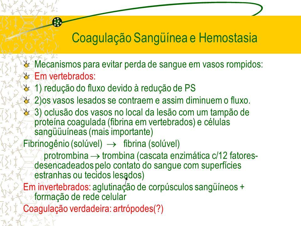 Coagulação Sangüínea e Hemostasia Mecanismos para evitar perda de sangue em vasos rompidos: Em vertebrados: 1) redução do fluxo devido à redução de PS