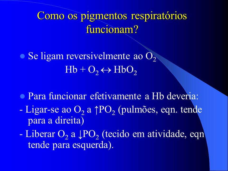 Como os pigmentos respiratórios funcionam? Se ligam reversivelmente ao O 2 Hb + O 2 HbO 2 Para funcionar efetivamente a Hb deveria: - Ligar-se ao O 2