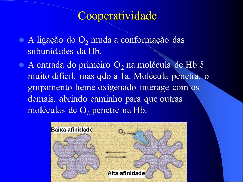 Cooperatividade A ligação do O 2 muda a conformação das subunidades da Hb. A entrada do primeiro O 2 na molécula de Hb é muito difícil, mas qdo a 1a.