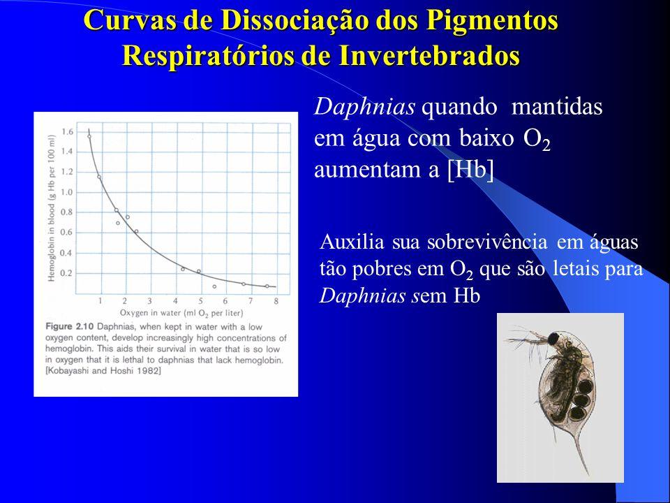 Curvas de Dissociação dos Pigmentos Respiratórios de Invertebrados Daphnias quando mantidas em água com baixo O 2 aumentam a [Hb] Auxilia sua sobreviv