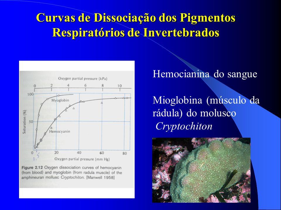 Curvas de Dissociação dos Pigmentos Respiratórios de Invertebrados Hemocianina do sangue Mioglobina (músculo da rádula) do molusco Cryptochiton