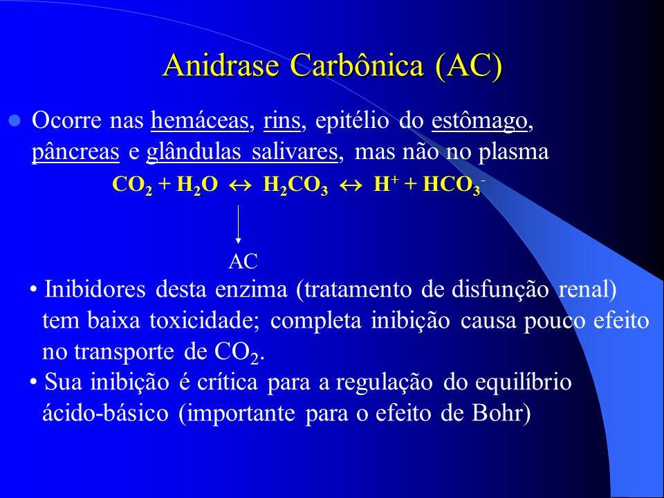 Anidrase Carbônica (AC) Ocorre nas hemáceas, rins, epitélio do estômago, pâncreas e glândulas salivares, mas não no plasma CO 2 + H 2 O H 2 CO 3 H + +