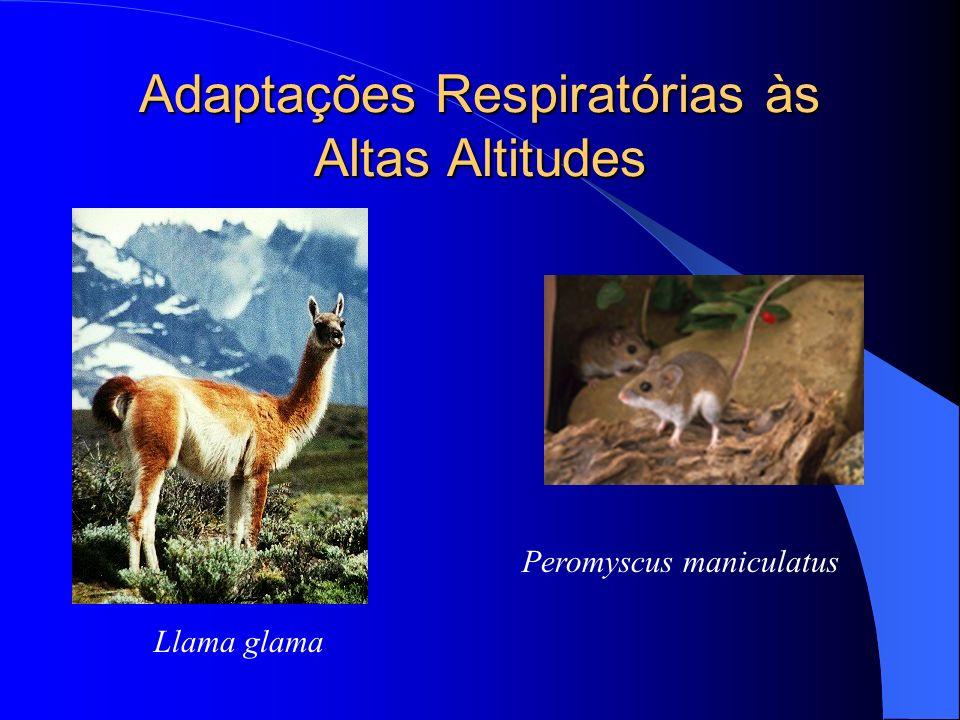 Adaptações Respiratórias às Altas Altitudes Peromyscus maniculatus Llama glama