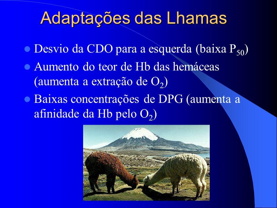 Adaptações das Lhamas Desvio da CDO para a esquerda (baixa P 50 ) Aumento do teor de Hb das hemáceas (aumenta a extração de O 2 ) Baixas concentrações