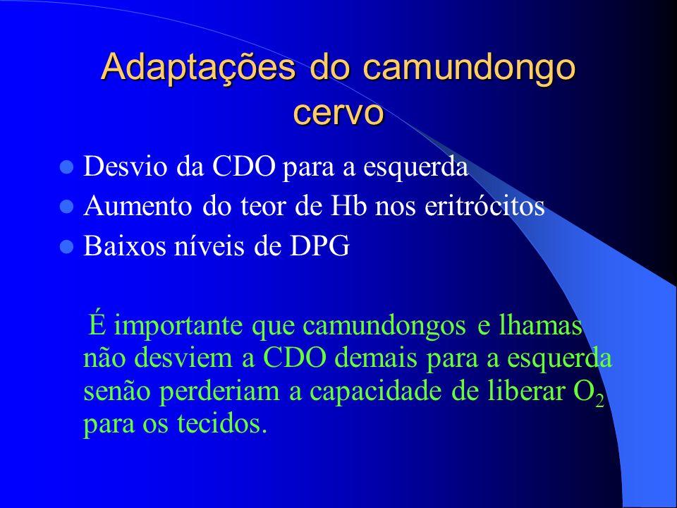 Adaptações do camundongo cervo Desvio da CDO para a esquerda Aumento do teor de Hb nos eritrócitos Baixos níveis de DPG É importante que camundongos e