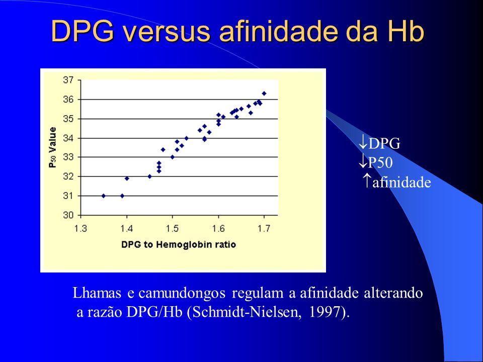 DPG versus afinidade da Hb DPG P50 afinidade Lhamas e camundongos regulam a afinidade alterando a razão DPG/Hb (Schmidt-Nielsen, 1997).