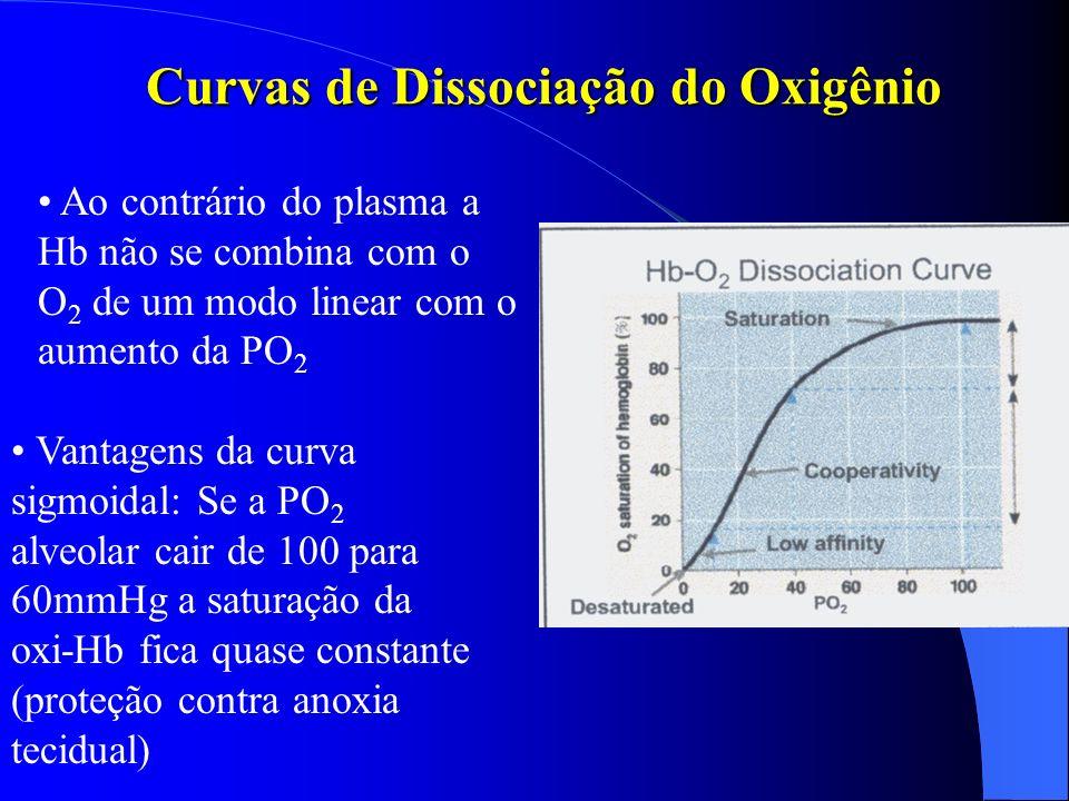 Curvas de Dissociação do Oxigênio Vantagens da curva sigmoidal: Se a PO 2 alveolar cair de 100 para 60mmHg a saturação da oxi-Hb fica quase constante