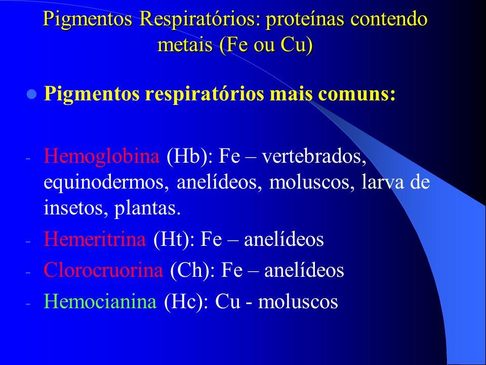 Pigmentos Respiratórios: proteínas contendo metais (Fe ou Cu) Pigmentos respiratórios mais comuns: - Hemoglobina (Hb): Fe – vertebrados, equinodermos,