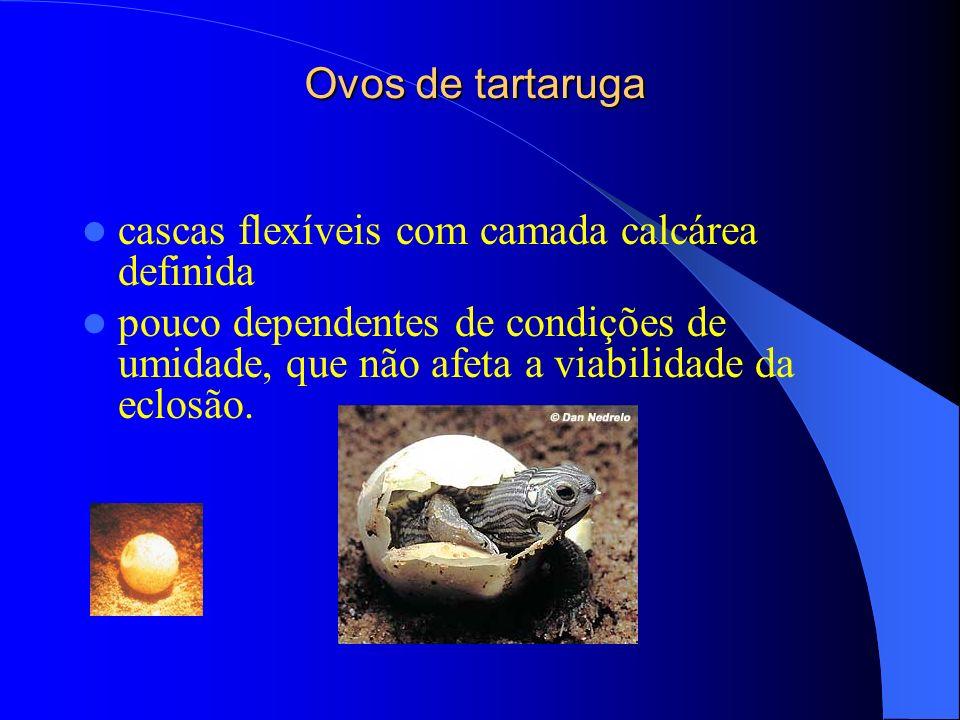 Ovos de tartaruga cascas flexíveis com camada calcárea definida pouco dependentes de condições de umidade, que não afeta a viabilidade da eclosão.
