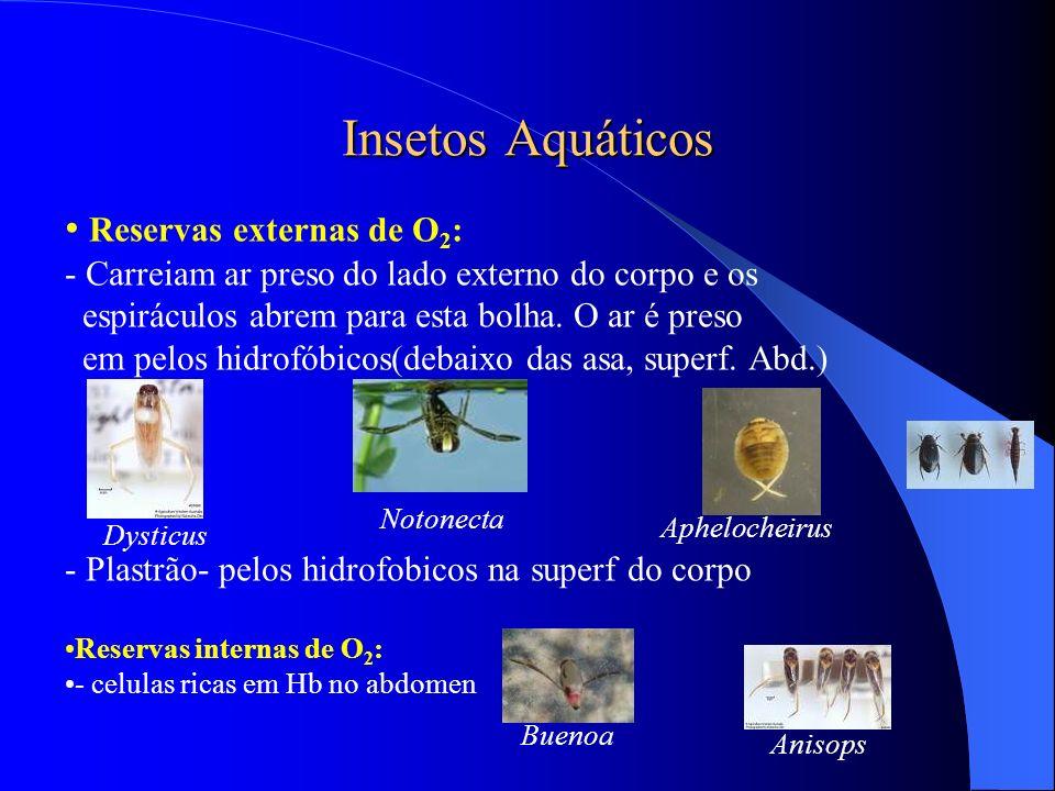 Insetos Aquáticos Reservas externas de O 2 : - Carreiam ar preso do lado externo do corpo e os espiráculos abrem para esta bolha. O ar é preso em pelo