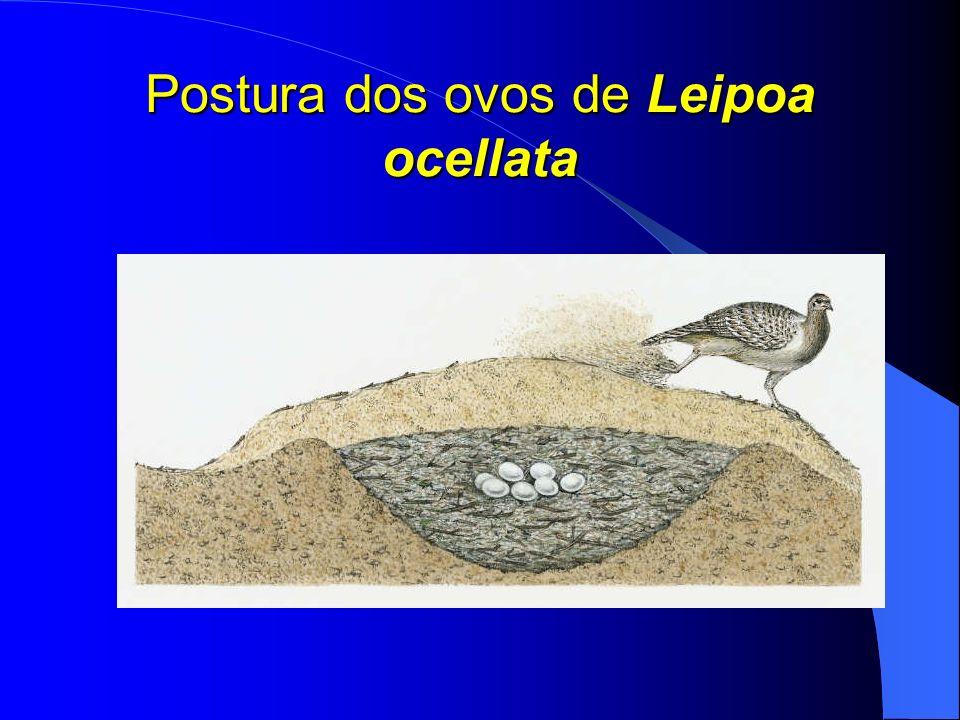 Ovos dos Répteis mais variáveis que os ovos das aves: finos e distensíveis a calcáreos (depende do hábitat, especialmente das condições de umidade onde o ovo é posto).