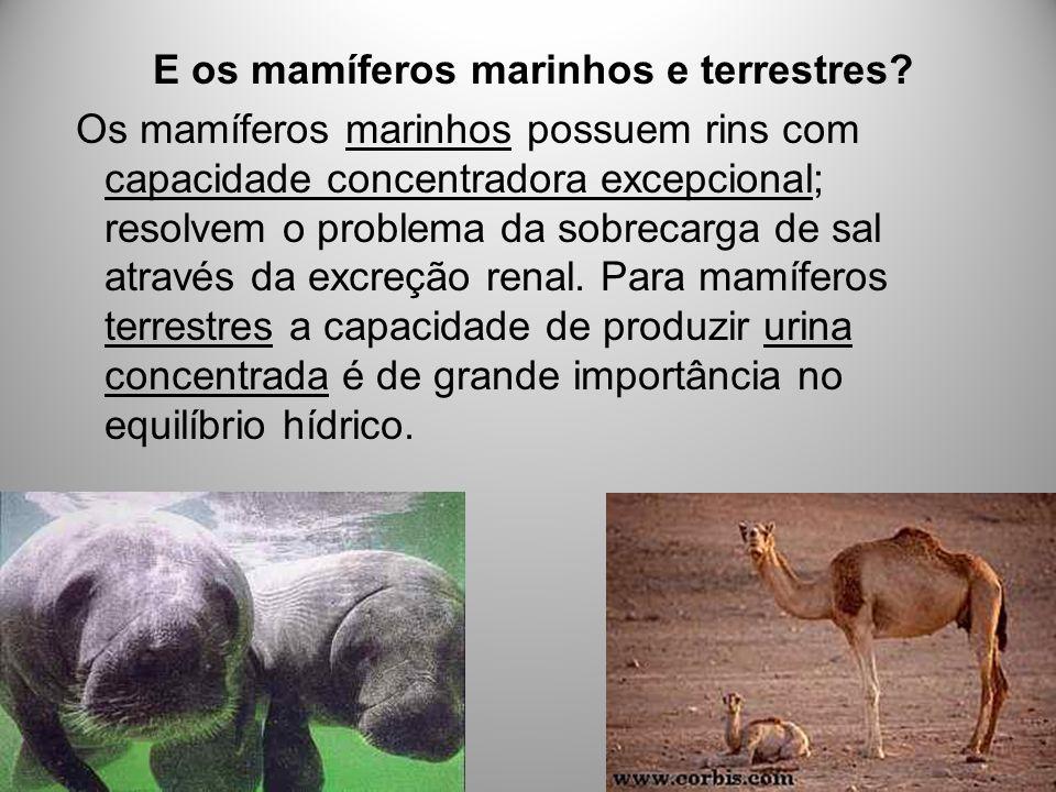 E os mamíferos marinhos e terrestres? Os mamíferos marinhos possuem rins com capacidade concentradora excepcional; resolvem o problema da sobrecarga d