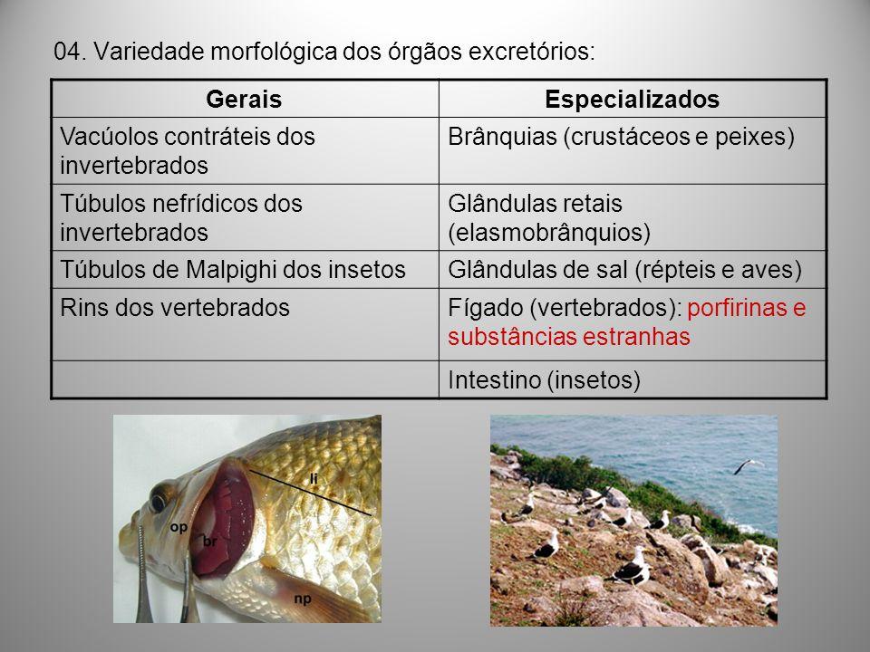 04. Variedade morfológica dos órgãos excretórios: GeraisEspecializados Vacúolos contráteis dos invertebrados Brânquias (crustáceos e peixes) Túbulos n