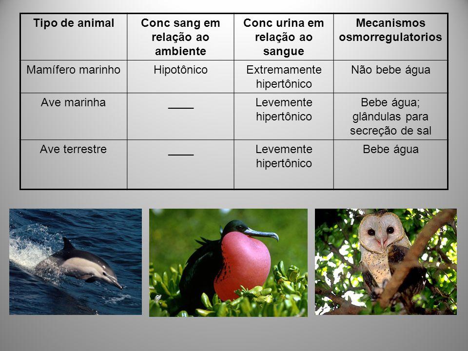 Tipo de animalConc sang em relação ao ambiente Conc urina em relação ao sangue Mecanismos osmorregulatorios Mamífero marinhoHipotônicoExtremamente hip