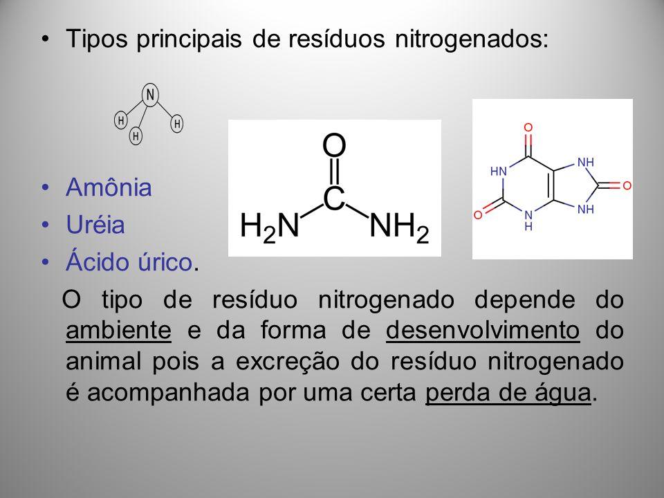 Tipos principais de resíduos nitrogenados: Amônia Uréia Ácido úrico. O tipo de resíduo nitrogenado depende do ambiente e da forma de desenvolvimento d