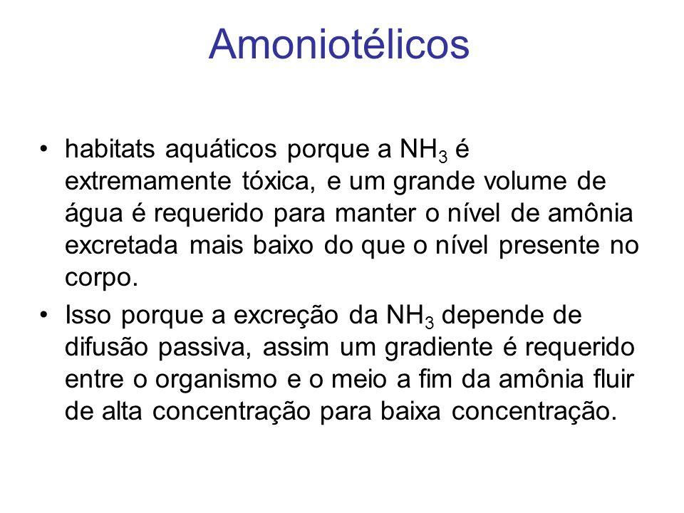 Amoniotélicos habitats aquáticos porque a NH 3 é extremamente tóxica, e um grande volume de água é requerido para manter o nível de amônia excretada m