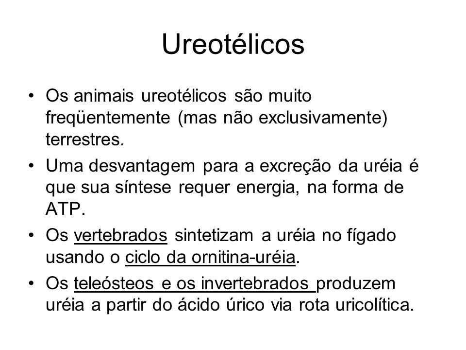Ureotélicos Os animais ureotélicos são muito freqüentemente (mas não exclusivamente) terrestres. Uma desvantagem para a excreção da uréia é que sua sí