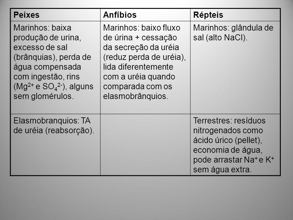 PeixesAnfíbiosRépteis Marinhos: baixa produção de urina, excesso de sal (brânquias), perda de água compensada com ingestão, rins (Mg 2+ e SO 4 2- ), a