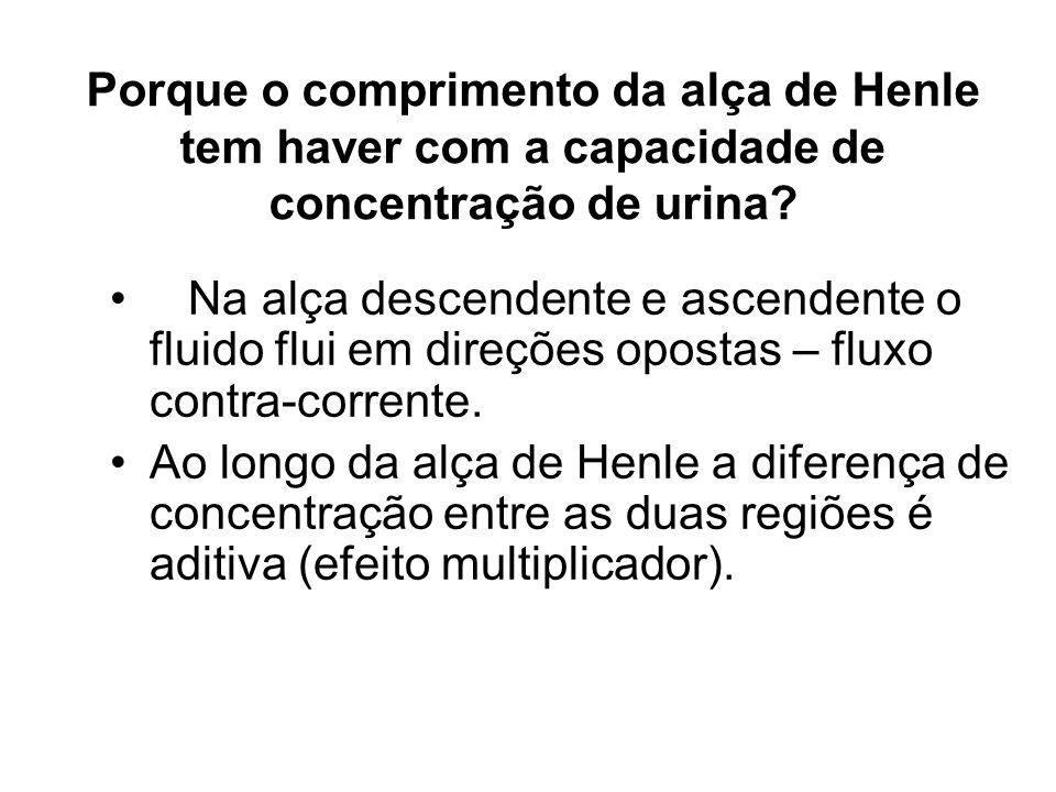 Porque o comprimento da alça de Henle tem haver com a capacidade de concentração de urina? Na alça descendente e ascendente o fluido flui em direções