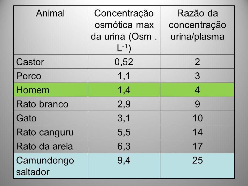 AnimalConcentração osmótica max da urina (Osm. L -1 ) Razão da concentração urina/plasma Castor0,522 Porco1,13 Homem1,44 Rato branco2,99 Gato3,110 Rat