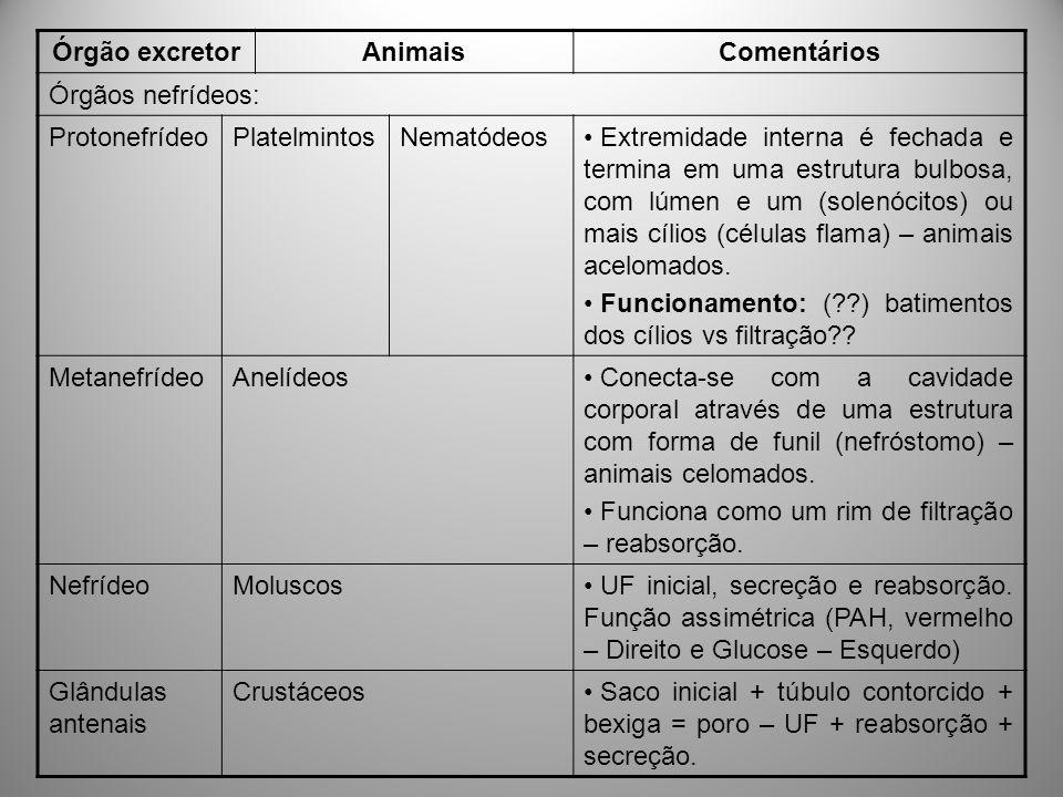 Órgão excretorAnimaisComentários Órgãos nefrídeos: ProtonefrídeoPlatelmintosNematódeos Extremidade interna é fechada e termina em uma estrutura bulbos
