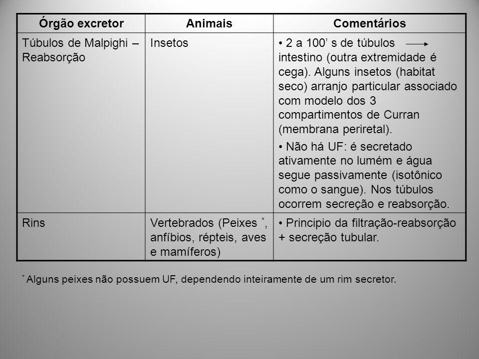 Excreção da NH 3 em mamíferos Enquanto a maior parte da excreção da amônia ocorre através das brânquias dos animais aquáticos, Os mamíferos excretam alguma NH 3 na urina.