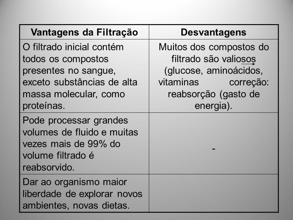 Vantagens da FiltraçãoDesvantagens O filtrado inicial contém todos os compostos presentes no sangue, exceto substâncias de alta massa molecular, como