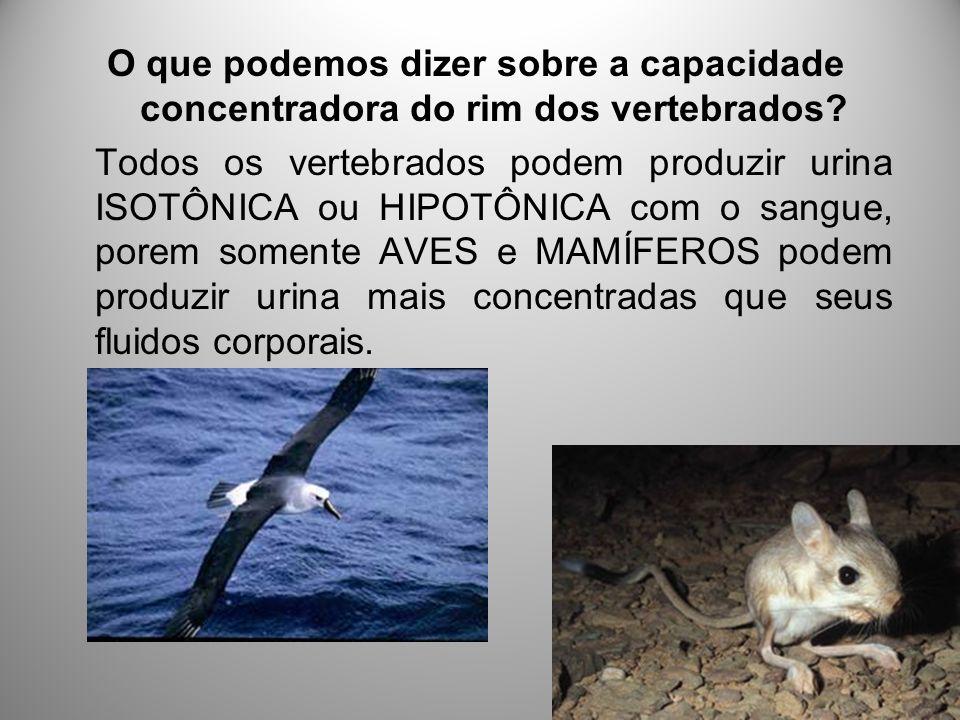 Uricotélicos As aves, os répteis e a maioria dos artropódes terrestres estão sujeitos a disponibilidade limitada de água.