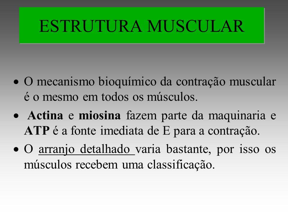 O mecanismo bioquímico da contração muscular é o mesmo em todos os músculos.