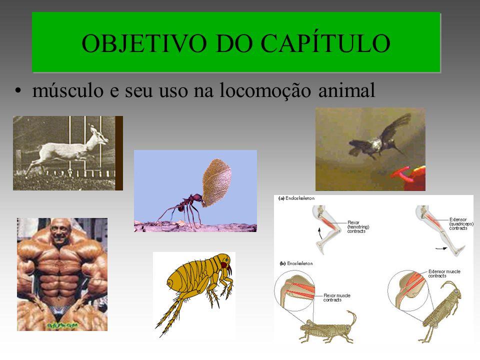 músculo e seu uso na locomoção animal OBJETIVO DO CAPÍTULO