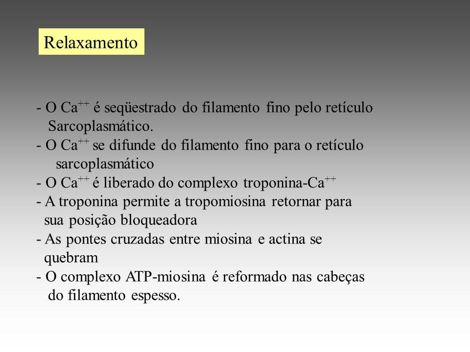 - O Ca ++ é seqüestrado do filamento fino pelo retículo Sarcoplasmático.