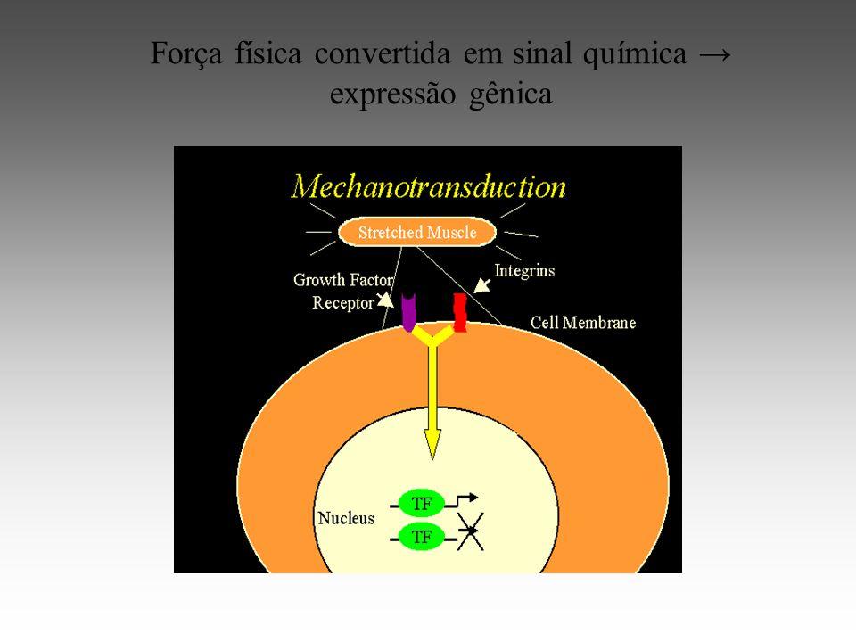 Força física convertida em sinal química expressão gênica