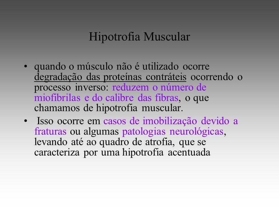 Hipotrofia Muscular quando o músculo não é utilizado ocorre degradação das proteínas contráteis ocorrendo o processo inverso: reduzem o número de miofibrilas e do calibre das fibras, o que chamamos de hipotrofia muscular.