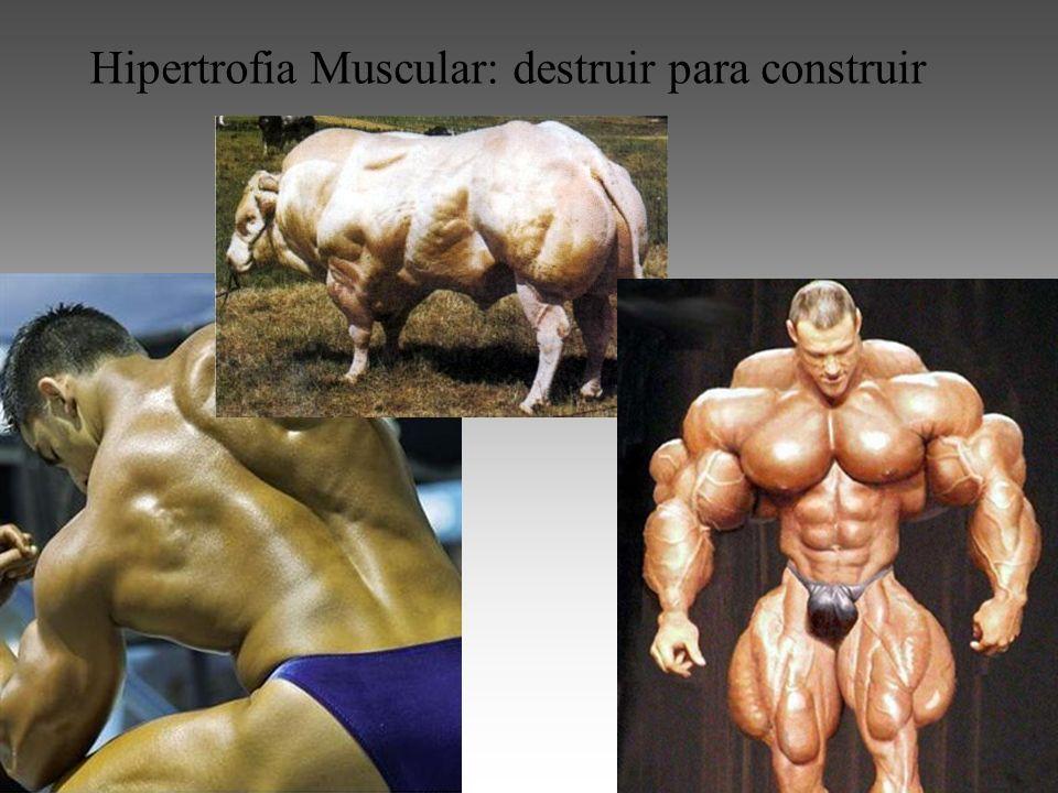 Hipertrofia Muscular: destruir para construir