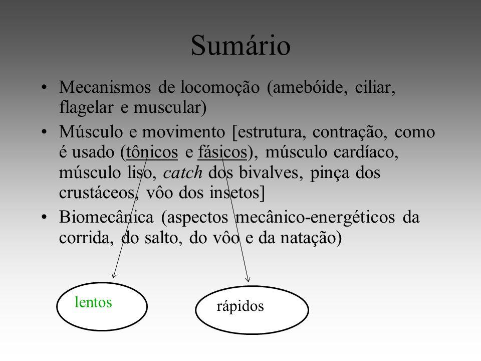 Sumário Mecanismos de locomoção (amebóide, ciliar, flagelar e muscular) Músculo e movimento [estrutura, contração, como é usado (tônicos e fásicos), músculo cardíaco, músculo liso, catch dos bivalves, pinça dos crustáceos, vôo dos insetos] Biomecânica (aspectos mecânico-energéticos da corrida, do salto, do vôo e da natação) lentos rápidos