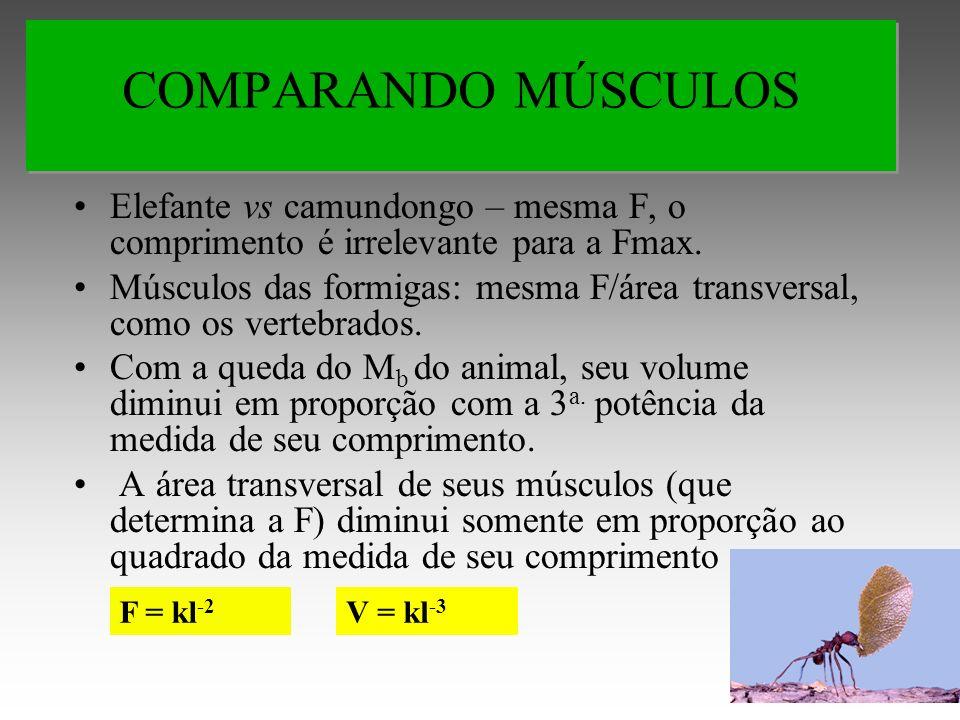 Elefante vs camundongo – mesma F, o comprimento é irrelevante para a Fmax.