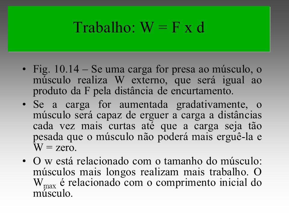 Fig. 10.14 – Se uma carga for presa ao músculo, o músculo realiza W externo, que será igual ao produto da F pela distância de encurtamento. Se a carga