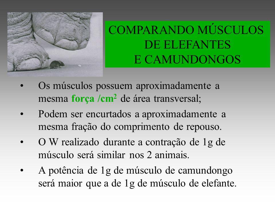 Os músculos possuem aproximadamente a mesma força /cm 2 de área transversal; Podem ser encurtados a aproximadamente a mesma fração do comprimento de repouso.
