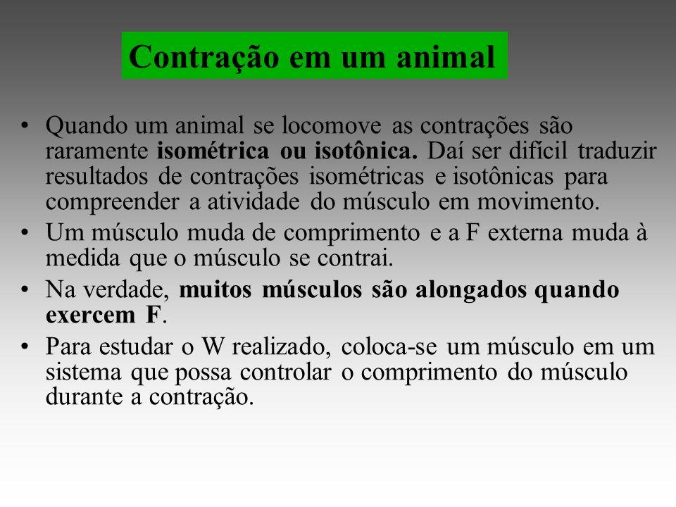 Quando um animal se locomove as contrações são raramente isométrica ou isotônica.