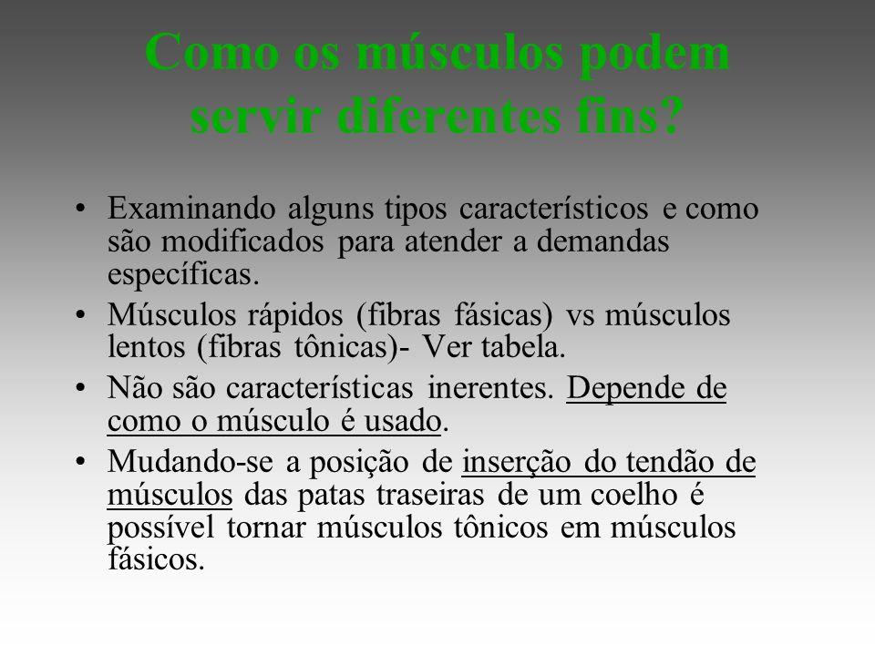 Como os músculos podem servir diferentes fins.