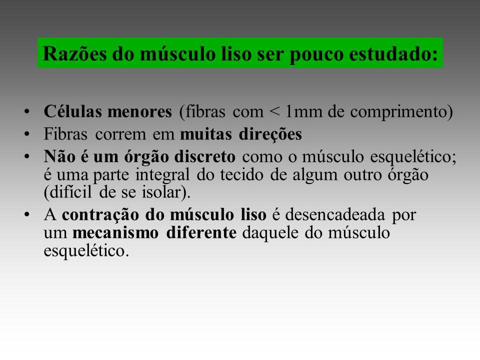 Células menores (fibras com < 1mm de comprimento) Fibras correm em muitas direções Não é um órgão discreto como o músculo esquelético; é uma parte integral do tecido de algum outro órgão (difícil de se isolar).