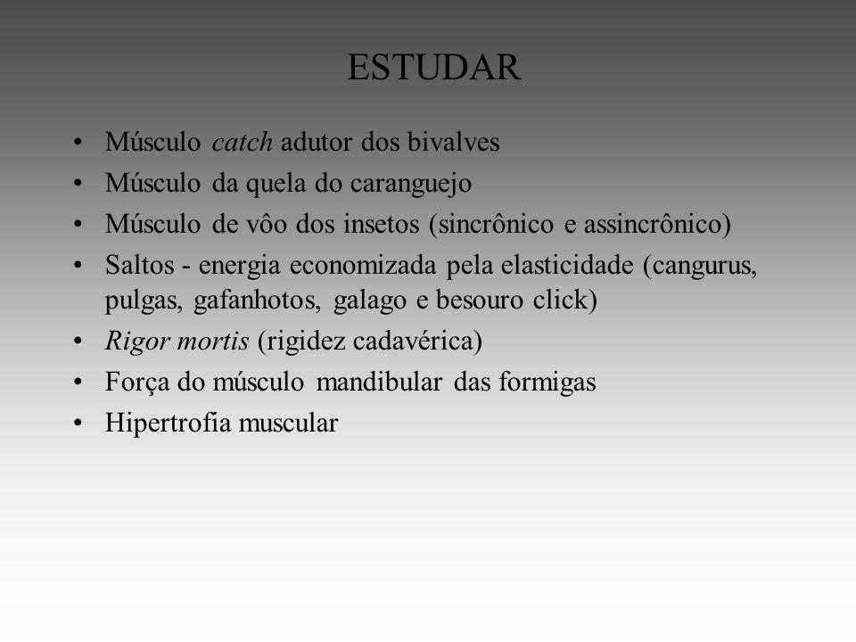 ESTUDAR Músculo catch adutor dos bivalves Músculo da quela do caranguejo Músculo de vôo dos insetos (sincrônico e assincrônico) Saltos - energia economizada pela elasticidade (cangurus, pulgas, gafanhotos, galago e besouro click) Rigor mortis (rigidez cadavérica) Força do músculo mandibular das formigas Hipertrofia muscular