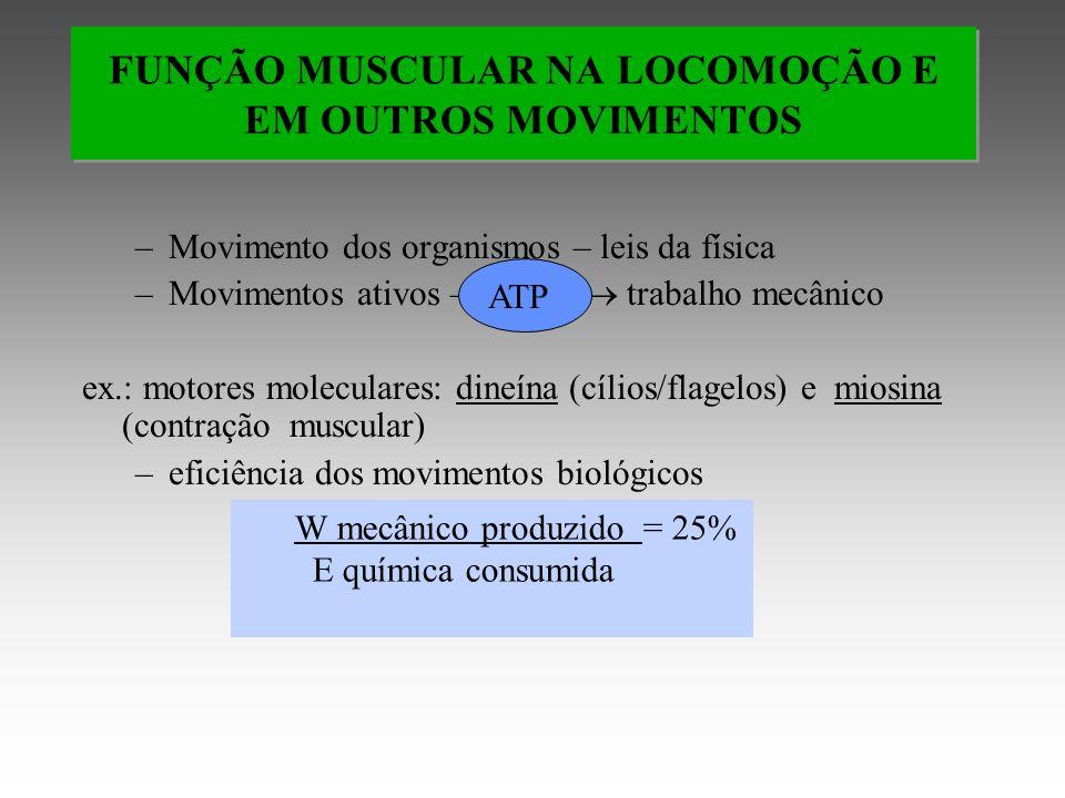 –Movimento dos organismos – leis da física –Movimentos ativos – trabalho mecânico ex.: motores moleculares: dineína (cílios/flagelos) e miosina (contração muscular) –eficiência dos movimentos biológicos FUNÇÃO MUSCULAR NA LOCOMOÇÃO E EM OUTROS MOVIMENTOS W mecânico produzido = 25% E química consumida ATP