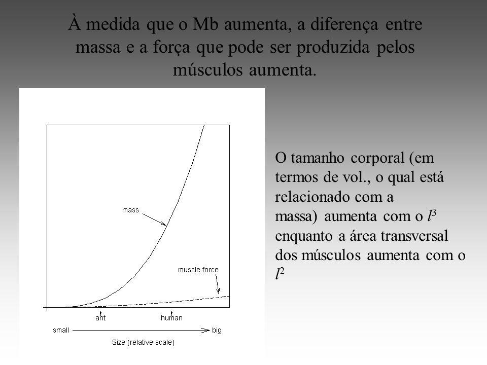 À medida que o Mb aumenta, a diferença entre massa e a força que pode ser produzida pelos músculos aumenta.