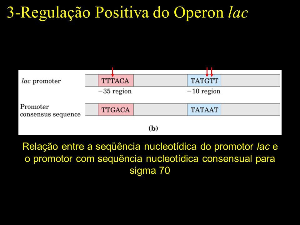3-Regulação Positiva do Operon lac Relação entre a seqüência nucleotídica do promotor lac e o promotor com sequência nucleotídica consensual para sigm