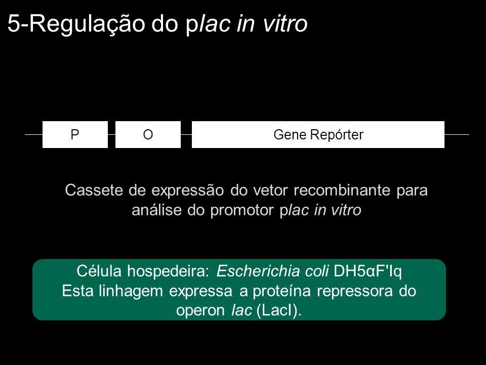 Cassete de expressão do vetor recombinante para análise do promotor plac in vitro OGene RepórterP Célula hospedeira: Escherichia coli DH5αF'Iq Esta li