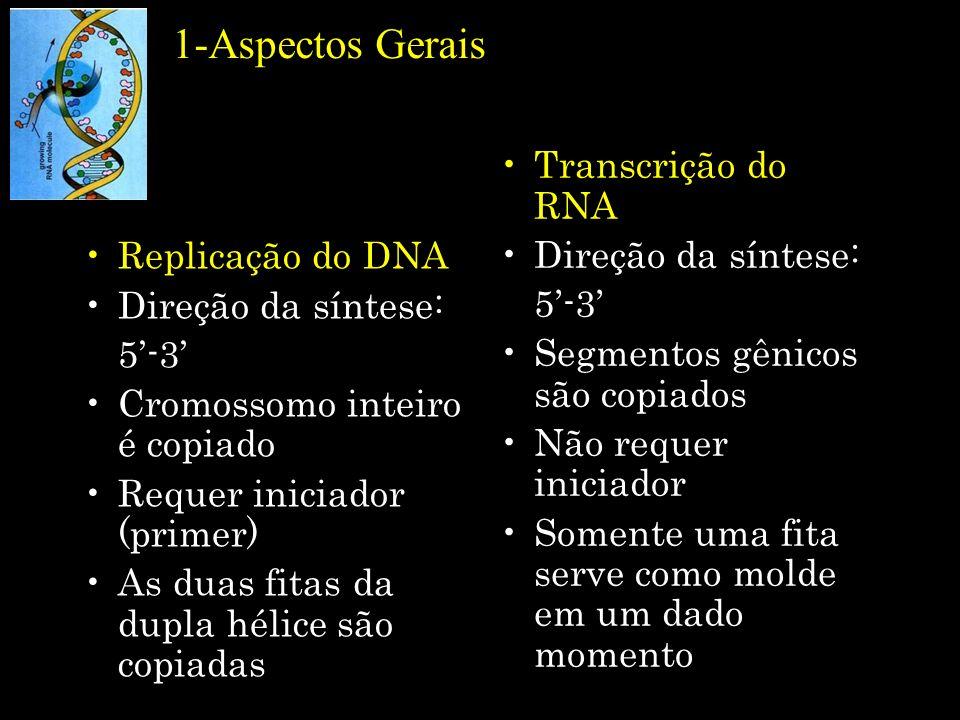 5-mRNA policistrônico Decodificação de vários genes a partir de um único mRNA Sítio de iniciação da síntese do mRNA trp Sítio de iniciação de síntese de proteínas Genoma de E.
