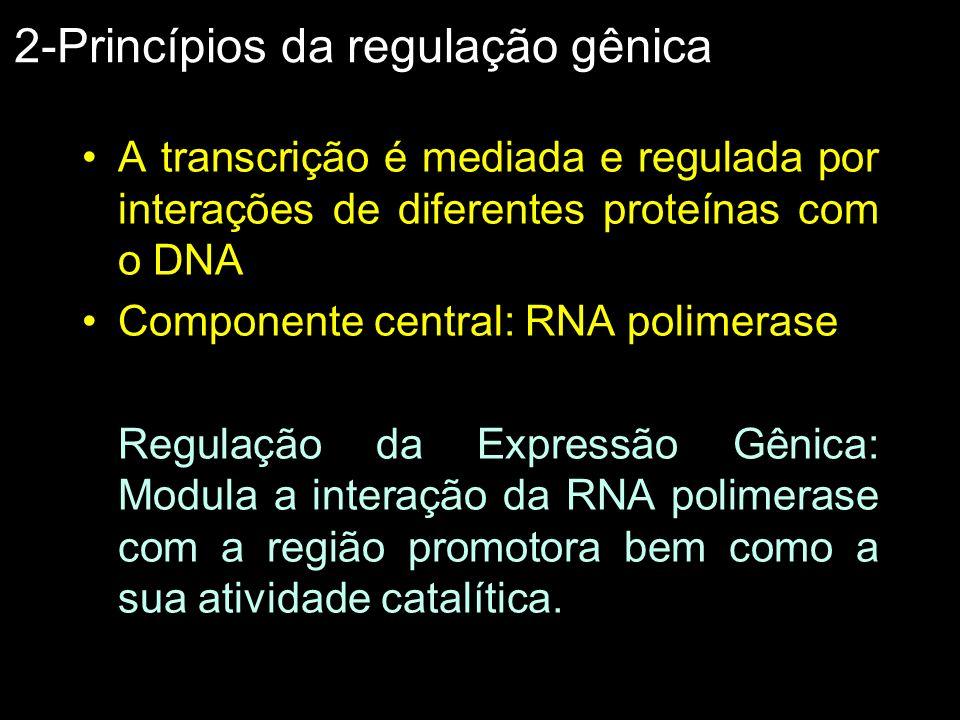 2-Princípios da regulação gênica A transcrição é mediada e regulada por interações de diferentes proteínas com o DNA Componente central: RNA polimeras